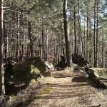 Foto aus dem Pfälzer Wald
