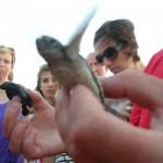 Schildkröten in Zypern