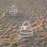 Schildkröten Nest in Zypern